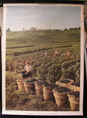 Schulwandbild Mural Image Wine France Grape Harvest in Champagne 52x72cm