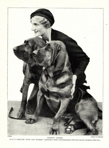 1930s Antique Bloodhound Dog Print Tombs Frolic and Fairlight Dog Print 3471-V