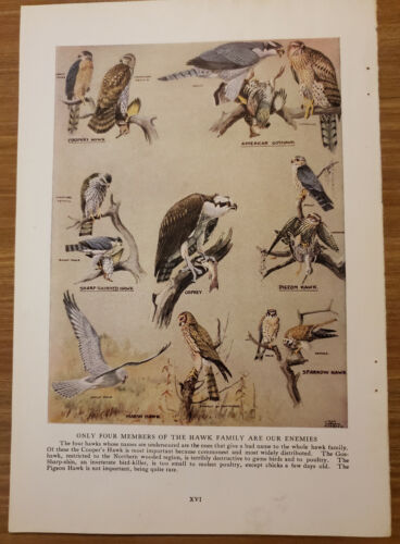 1920 HAWK FAMILY Bookplate Art Print Painted by Louis Agassiz Fuertes - ng22