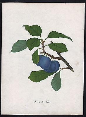 PFLAUME PFLAUMEN Aquatinta 1818 handkoloriert Original!