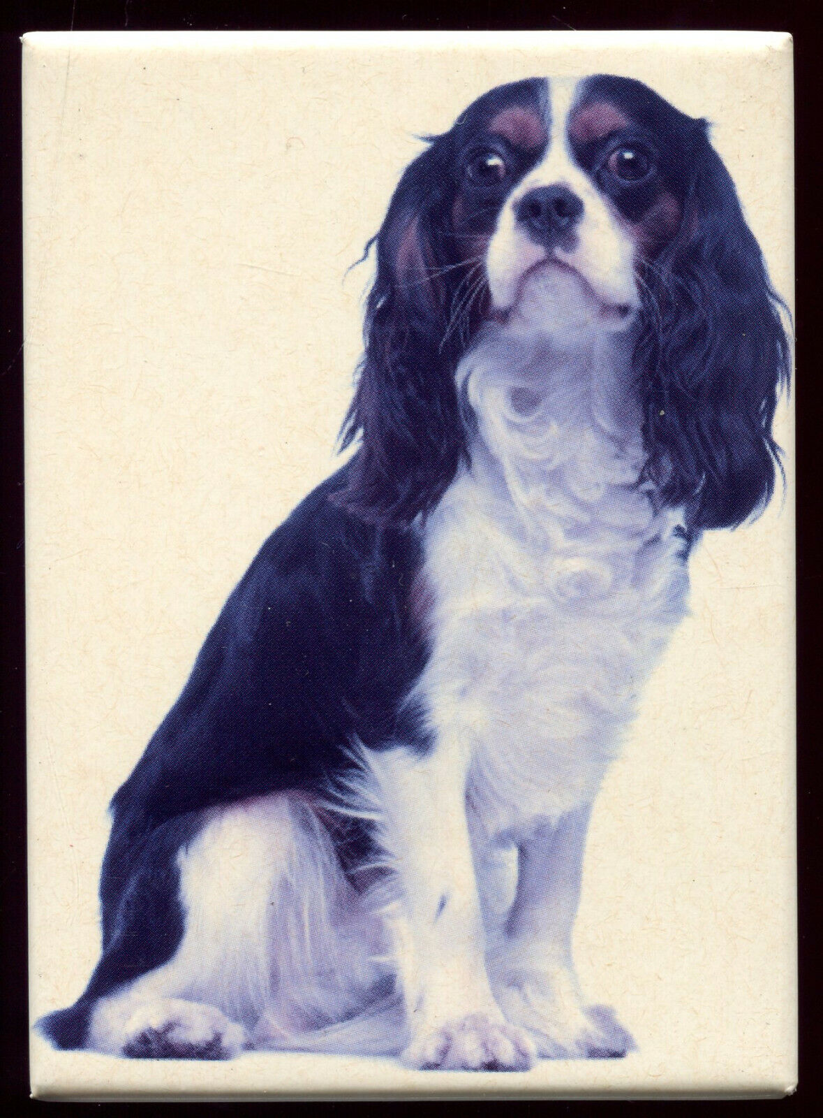magnet chien cavalier king charles