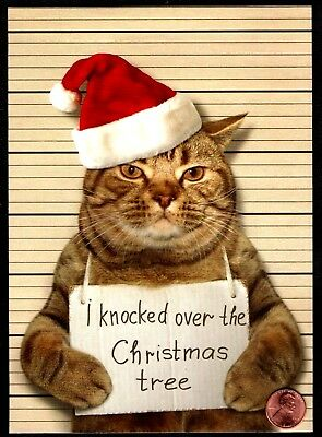 Christmas Kitten Cat Santa Hat Mugshot - HUMOR - Christmas Greeting Card  ()