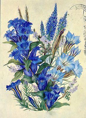 Alte Kunstpostkarte - Esther Zimmermann-Barning - Blauer Schatz der Gärten
