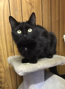 Leila- 18 months old- Available for Adoption