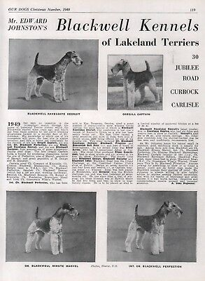 LAKELAND TERRIER DOG BREED KENNEL ADVERT PRINT PAGE OUR DOGS 1949 BLACKWELL