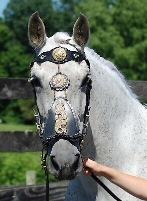 Padded Side pull Bridle Elite Equest Stainless Steel Hardware Bitless Bridle