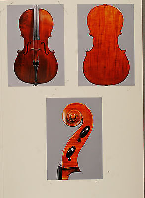 A very fine, old certified French cello by Francois Barbe Pere, ca. 1835 on Rummage