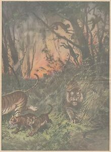 K0159 Animali fuggono da foresta incendiata dagli Inglesi - Stampa - 1931 print - Italia - L'oggetto può essere restituito - Italia