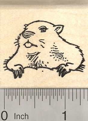 Groundhog Day Rubber Stamp, Marmot Emerging From Burrow D26607 WM](Groundhog Day Crafts)