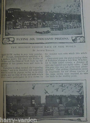 Racing Homing Pigeon Biggest Race in World Old Victorian Antique Article 1900
