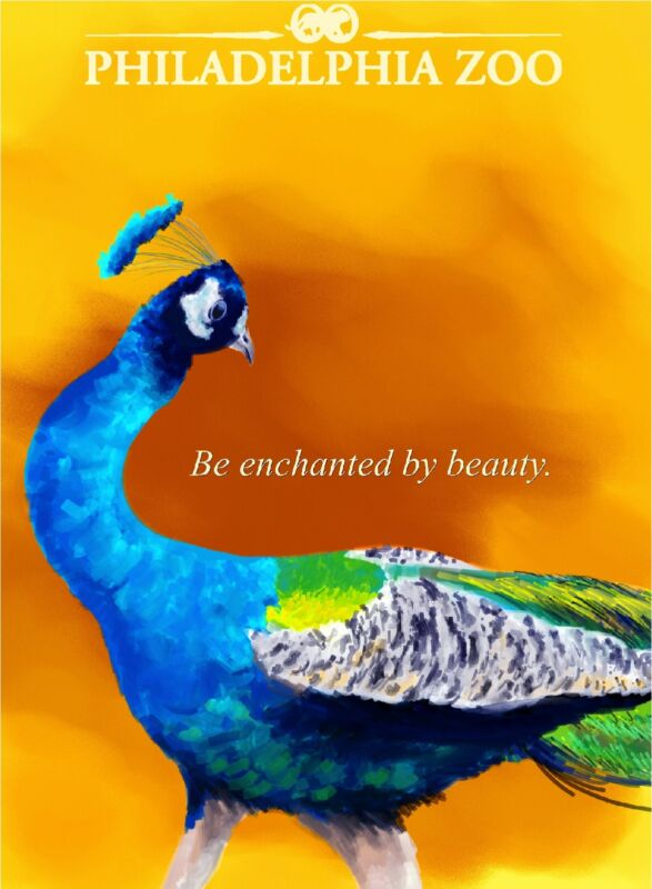 Peacock Philadelphia Pennsylvania Zoo United States Travel Advertisement Poster
