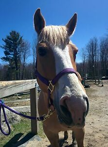 Gelding for part board / free lease