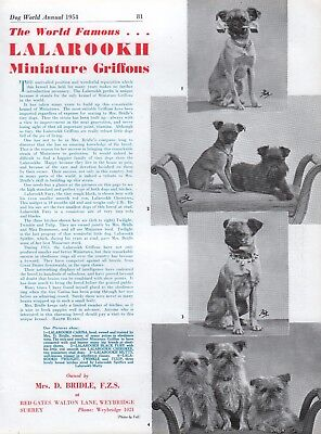BRUSSELS GRIFFON DOG WORLD BREED KENNEL ADVERT PRINT PAGE LALAROOKH KENNEL 1954