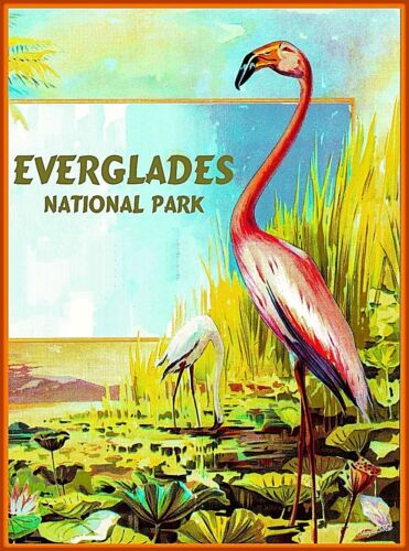 Everglades National Park Florida United States Travel  Advertisement Art Poster