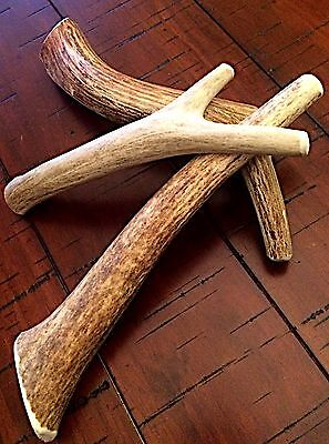 1 Pound Premium Elk & Deer Antler Dog Chew Mix-Medium/Large-Great buy!!! (Buy Deer Antlers)