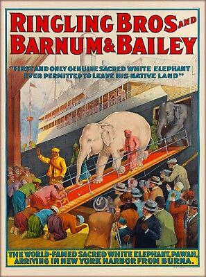 Ringling Bros Barnum & Bailey Elephant Pawah Burma Vintage Circus Travel Poster