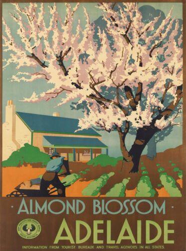 Almond Blossom Adelaide South Australia Vintage Travel Advertisement Poster