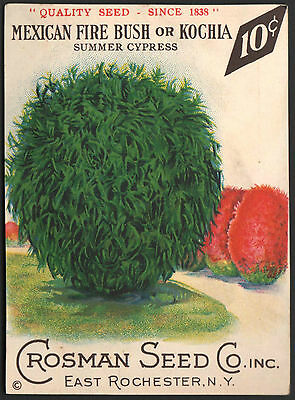Mexican Bush - *Vintage MEXICAN FIRE BUSH Flower Seed Packet Front Only CROSMAN SEED 1930s RARE