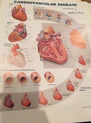 Cardiovascular Disease Cardiology Anatomy Poster Anatomical Chart Company