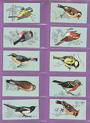 BIRDS  -  TETLEY  TEA  -  VERY  RARE  SET  48  BRITISH  BIRDS  CARDS  -  1970