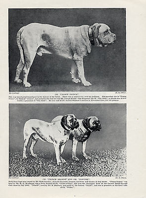 MASTIFF THREE NAMED CHAMPION DOGS OLD ORIGINAL DOG PRINT FROM 1934