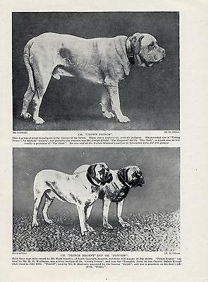 MASTIFF THREE NAMED CHAMPION DOGS OLD ORIGINAL DOG PRINT FROM 1934