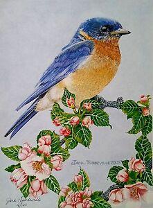 Bluebird Print by Jack Turbyville