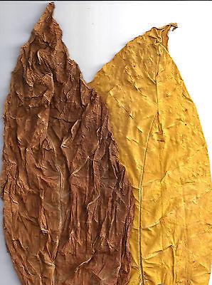 Tabakblätter /'/'Burley/'/' 1 Kg Premium Qualität Tabak,Tabakpflanzen