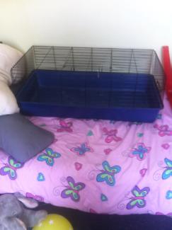 Rabbit/guinea pig cage!!