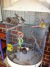 Pair of Zebra Finches with cage and food Canning Vale Canning Area Preview