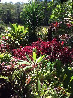 Drought tollerant tropical plants for sale  Yandina Creek Noosa Area Preview