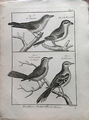 Have It of Senegal Guirarou Benard 1790 Histoire Naturelle Ornithology Birds