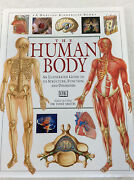 The Human Body - illustrated Guide Parrearra Maroochydore Area Preview