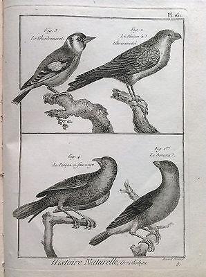 The Goldfinch the Pinch Benard 1790 Histoire Naturelle Ornithology Birds