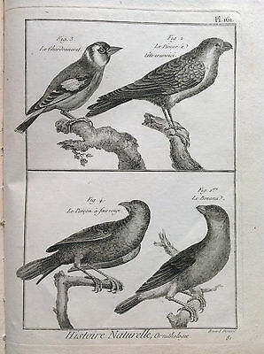 IL CARDELLINO IL PIZZICO   Benard 1790 HISTOIRE NATURELLE Ornitologia Uccelli