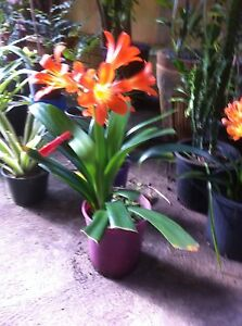 Cheap plants Bayswater Bayswater Area Preview