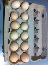 Fertile Silkie Eggs Mile End West Torrens Area Preview