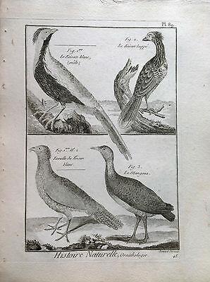Pheasant White Heirloom Benard 1790 Histoire Naturelle Ornithology Birds