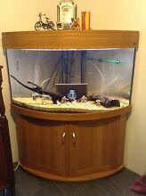 Aqua One curved face corner fish tank $1000 ono Beeliar Cockburn Area Preview