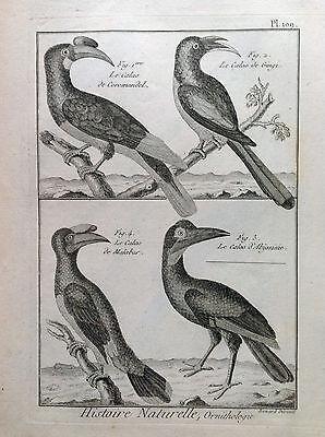 Calao of Malabar D'Abyssinia Benard 1790 Histoire Naturelle Ornithology Birds