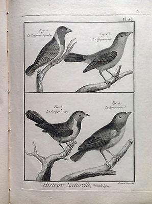 The Tangora, Cape Red Benard 1790 Histoire Naturelle Ornithology Birds