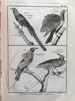 The Magnificent the Superb Benard 1790 Histoire Naturelle Ornithology Birds