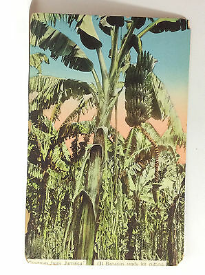 Greetings from Jamaica Bananas Ready for Cutting Vintage Postcard Color Unused