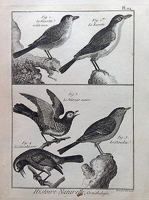 Bird Canoro Dunnock Benard 1790 Histoire Naturelle Ornithology Birds