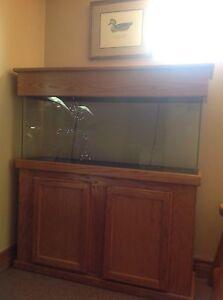 70 gallon fish tank