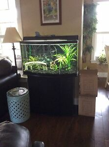 Aquarium complete with stand, filter, accessories and some fish. Kawartha Lakes Peterborough Area image 2