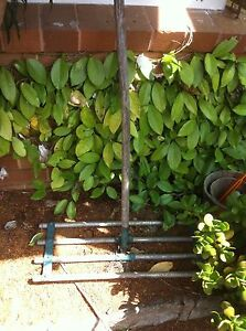 Garden tools lawn leveller square mouth shovel $20 West Pennant Hills West Pennant Hills The Hills District Preview