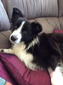 Dog minding McLaren Vale Morphett Vale Area Preview