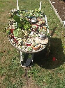wheelbarrowFull of assorted succulents and cactus ect Kings Meadows Launceston Area Preview