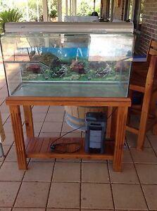 Turtle tank aquarium with stand Gawler Gawler Area Preview